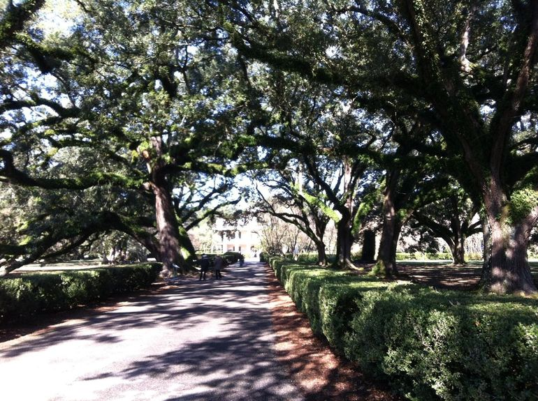 Oak Alley - New Orleans