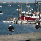 Excursión de ida y vuelta en ferry rápido a Cape Cod, Boston, MA, ESTADOS UNIDOS