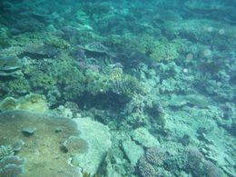 Reef Shark , Hunter90 - July 2015