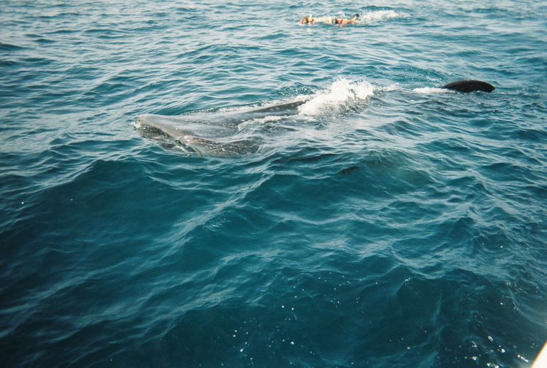 Whale Sharks tour in Cancun & Riviera Maya: Small-Group Eco Friendly photo 20