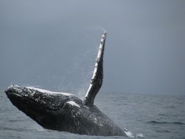 one of the great whale photos we got during our tour , jjfisher406 - August 2015