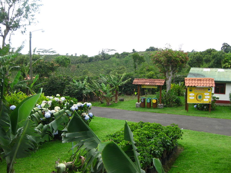 coffee plantation - San Jose