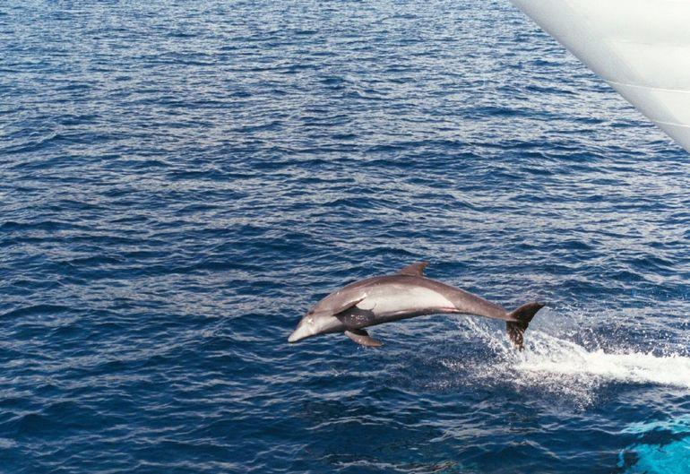 Oahu Whale Watching Cruise - Oahu