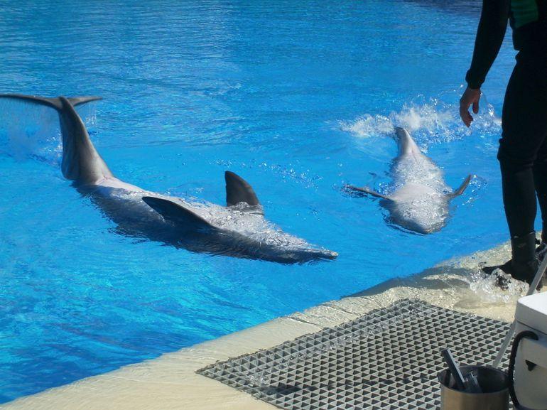 Dolphin Habitat - Las Vegas