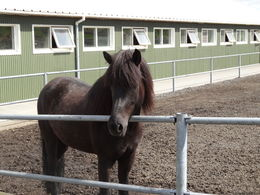 Not my pony and quot;Phil and quot; but he looked just like this! , Mandy - June 2013