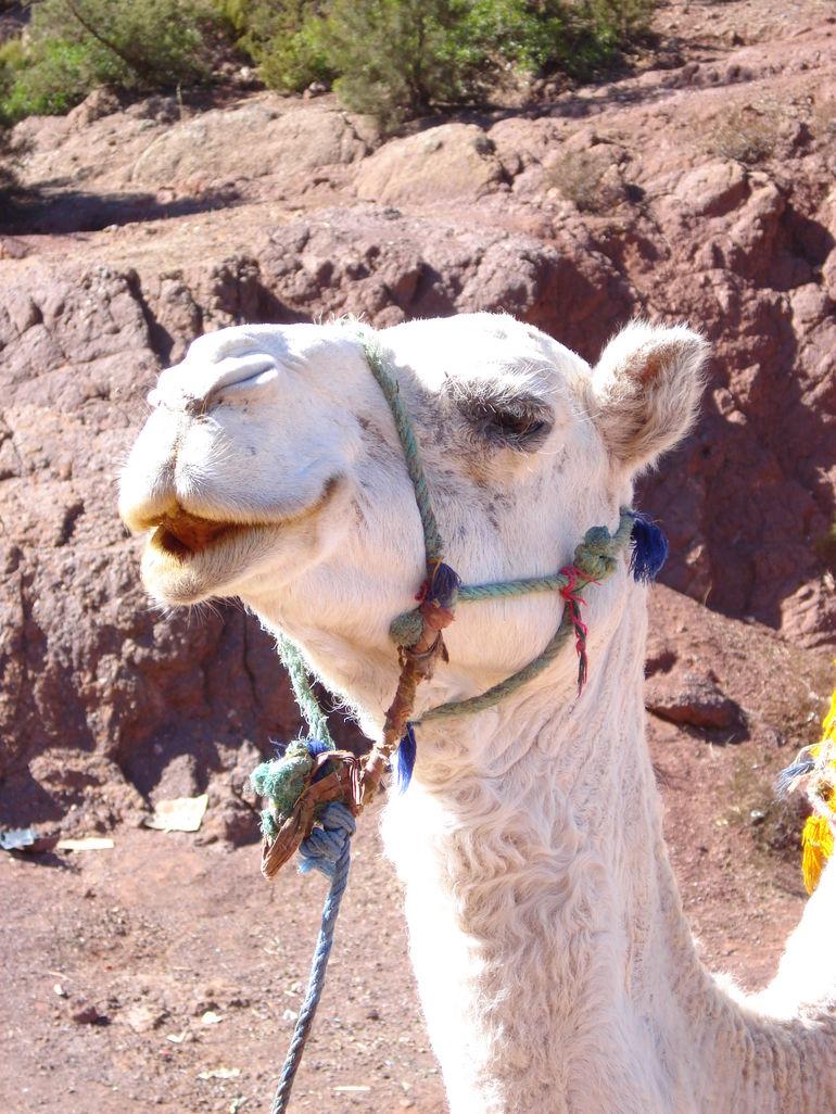 New friends outside of Marrakech - Marrakech