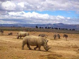 Rhino - May 2016