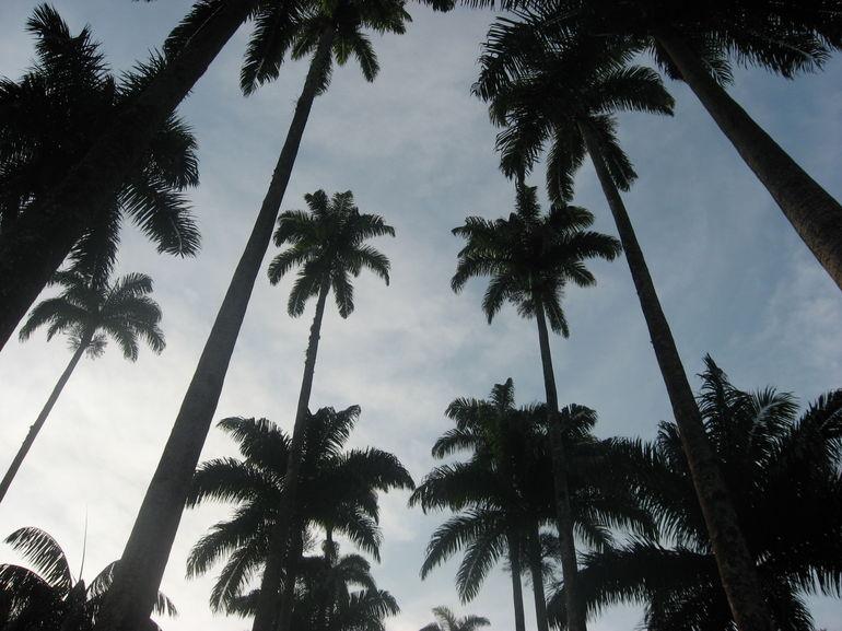 Trees - Rio de Janeiro