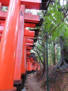 Fushimi Inari Taisha where there are approx 10,000 tori , Alison H - October 2017