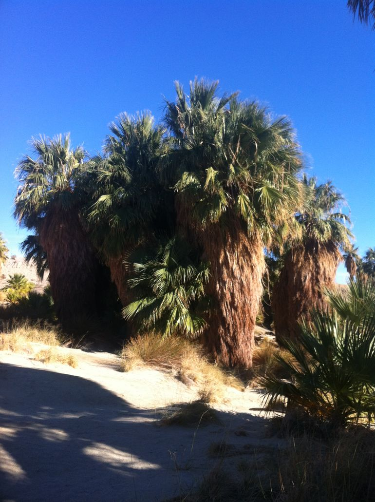 An Oasis in the Desert - Palm Springs