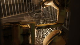 Scary spider web at and quot;the last 3 steps and quot; , wenll - November 2011