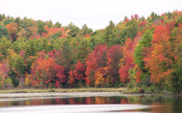 Spectacular fall foliage on the lake , Uma S - October 2014