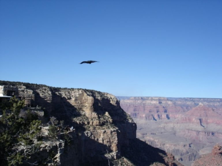 Grand Canyon Landscape - Las Vegas