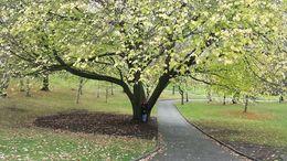The Royal Tasmanian Botanical Gardens and Japanese garden section were a highlight. , David C - June 2014