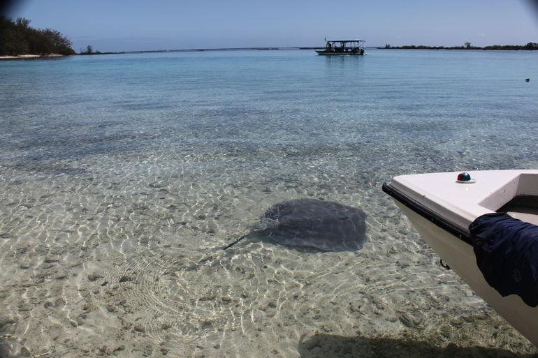 Moorea Snorkeling Safari - French Polynesia