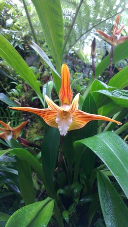 National Orchid Garden, Botanical Gardens , Mark W - July 2013