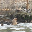 Crucero Islas Palomino y experiencia de nado con leones marinos desde Lima, Lima, PERU