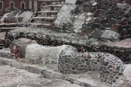 Snake amongst the ruins of the Templo Mayor., Bandit - September 2012