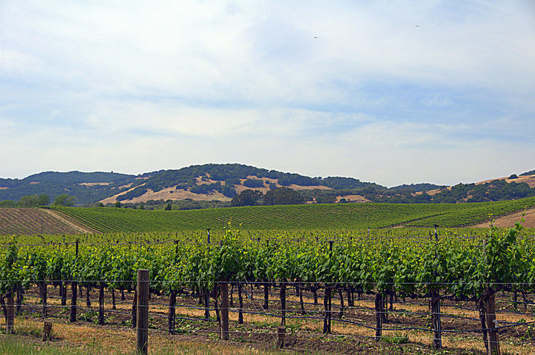 Wine Country Tour - San Francisco