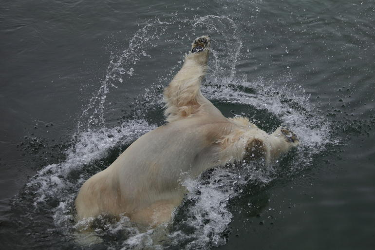 Private Guided Lapland Ranua Zoo tour from Rovaniemi