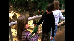 The San Diego Zoo Safari Park's bird feeding happens daily and is great change for kids to interact with the park's wildlife! - July 2011