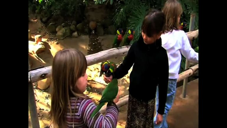 Bird Feeding, Safari Park - San Diego