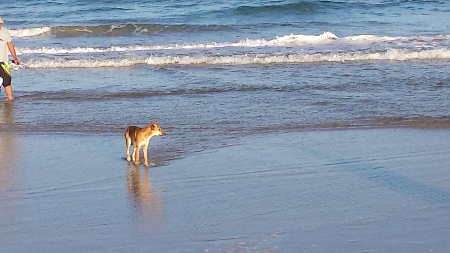 MÁS FOTOS, Excursión de 2 días a la isla Fraser en vehículo 4X4 desde Brisbane o Gold Coast