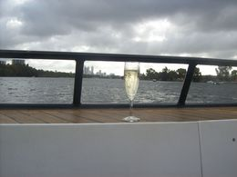 Cruising calmly on the Swan River. It's a tough life, but someone has to do it! , Diane M B - March 2015