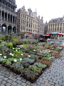Markt Square flower market on a rainy Saturday morning. , Megan S - October 2012