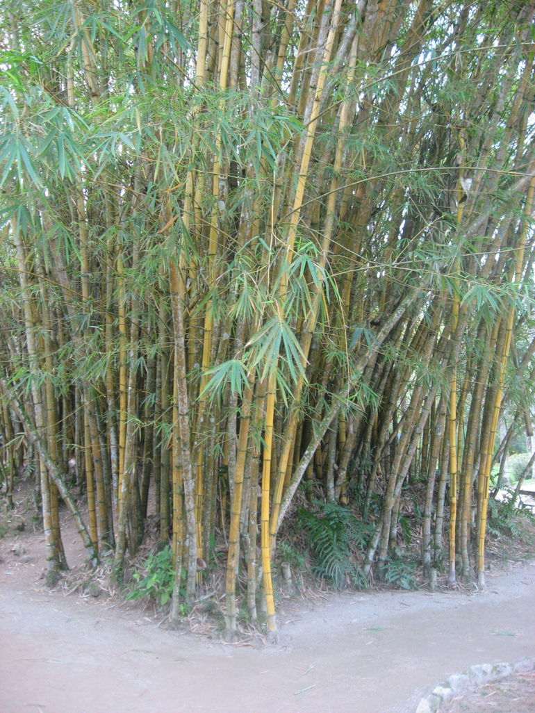 Bamboo - Rio de Janeiro