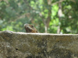 Even the wildlife enjoy the Mayan culture , Sandra R - May 2014
