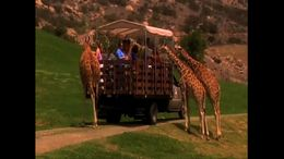 Enjoy this safari ride through the Giraffe habitat at the San Diego Zoo Safari Park. - July 2011