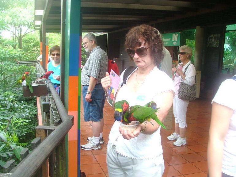 Singapore bird park 046 - Singapore