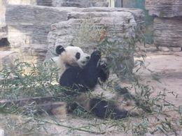 Panda Garden , Carla S - March 2011