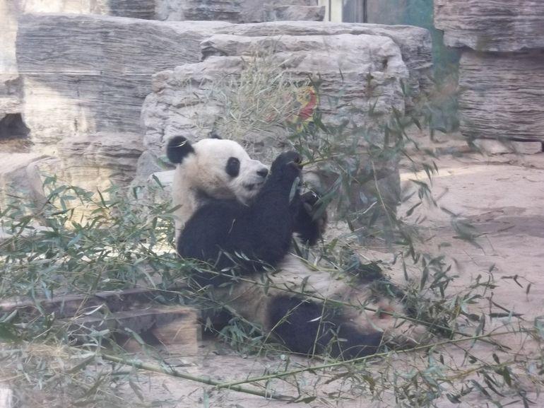 Zoo - Beijing