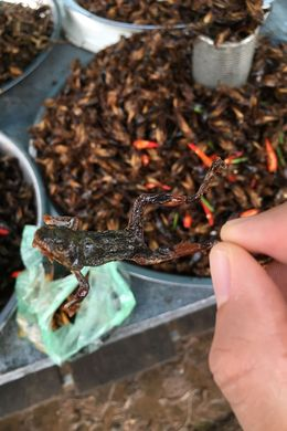 This was at the beginning before the bbq area. Crickets, frog, silkworms, you name it! , Maria T - July 2016
