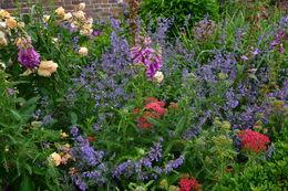 Flower garden at Leeds Castle , Jessica - July 2016