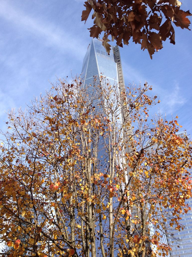 Survivor Tree and Freedom Tower - New York City