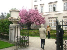 The gardens - LOVE the tree's flowers' colours. , Sofiah S - May 2011