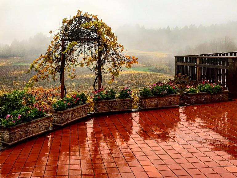 Willamette Valley Wine-Tasting Tour from Portland