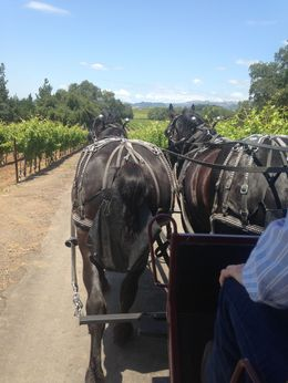 Going through the vineyards. , Linda H - June 2015