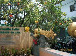 Cashew Tree outside cashew nut factory, Geoff - April 2010