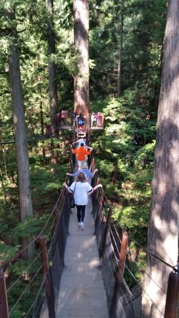 After crossing the bridge, the amazing park has a lot to offer. Lots of bridges to walk from one tree to another. , Vanina M - September 2016