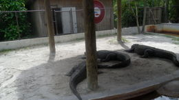 Gator Show , Khang Thuan L - September 2011