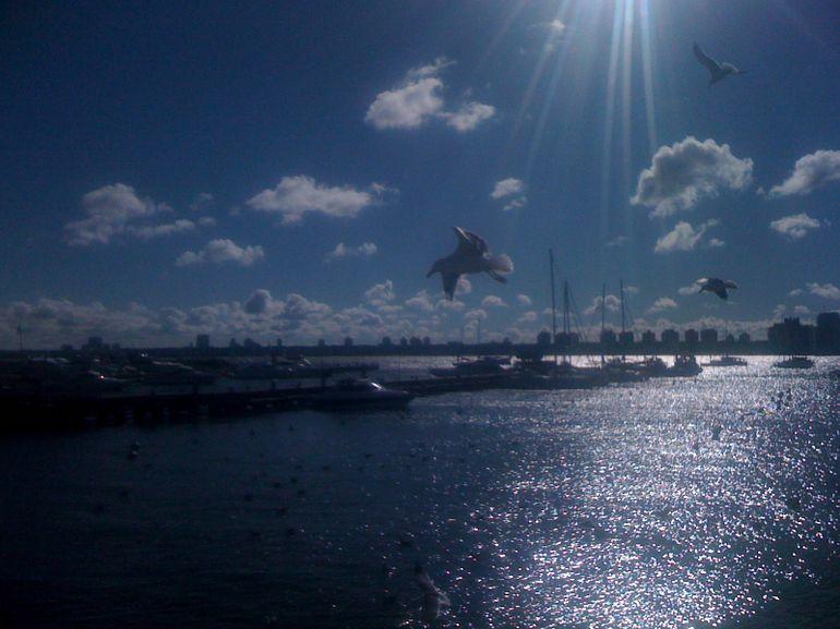 Harbor - Punta del Este