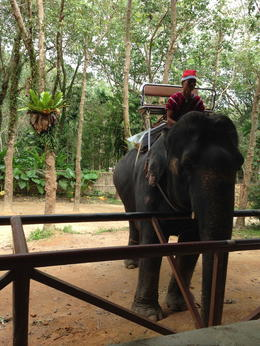 This was after we'd been on our Elephant ride and just before we fed her. , plucka73 - January 2015