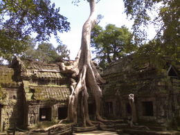 in Siem Reap, Cambodia , Cambodia Expert: Narin - April 2011
