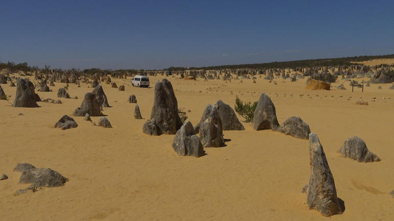Pinnacles Desert, Koalas, and Sandboarding 4WD Day Tour from Perth photo 8