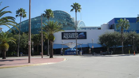 Three Great Attractions One Great Price With The Tampa