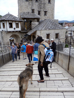 A dog follows us on the Old Bridge , Carmel - June 2015